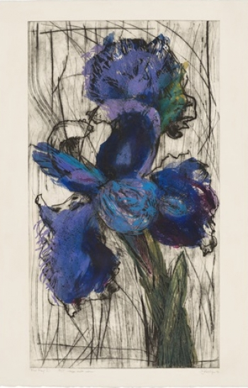Dutch Iris (Trial Proof D)